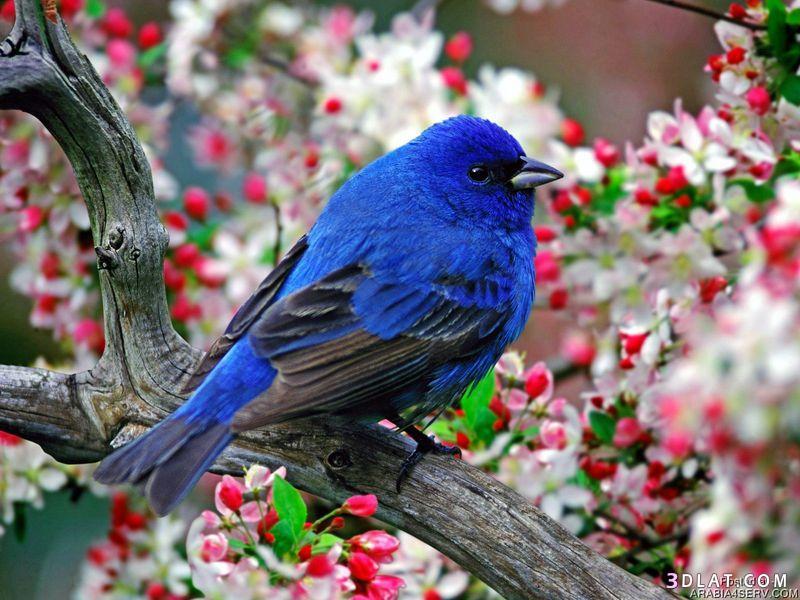 صورة صور طيور , اجمل صور للطيور