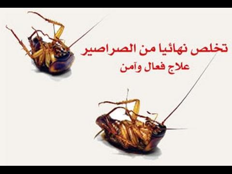 صورة القضاء على الصراصير , كيفية التخلص من الصراصير