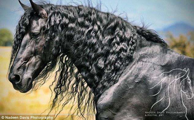 صورة اجمل حصان في العالم , حصان جميل 2019