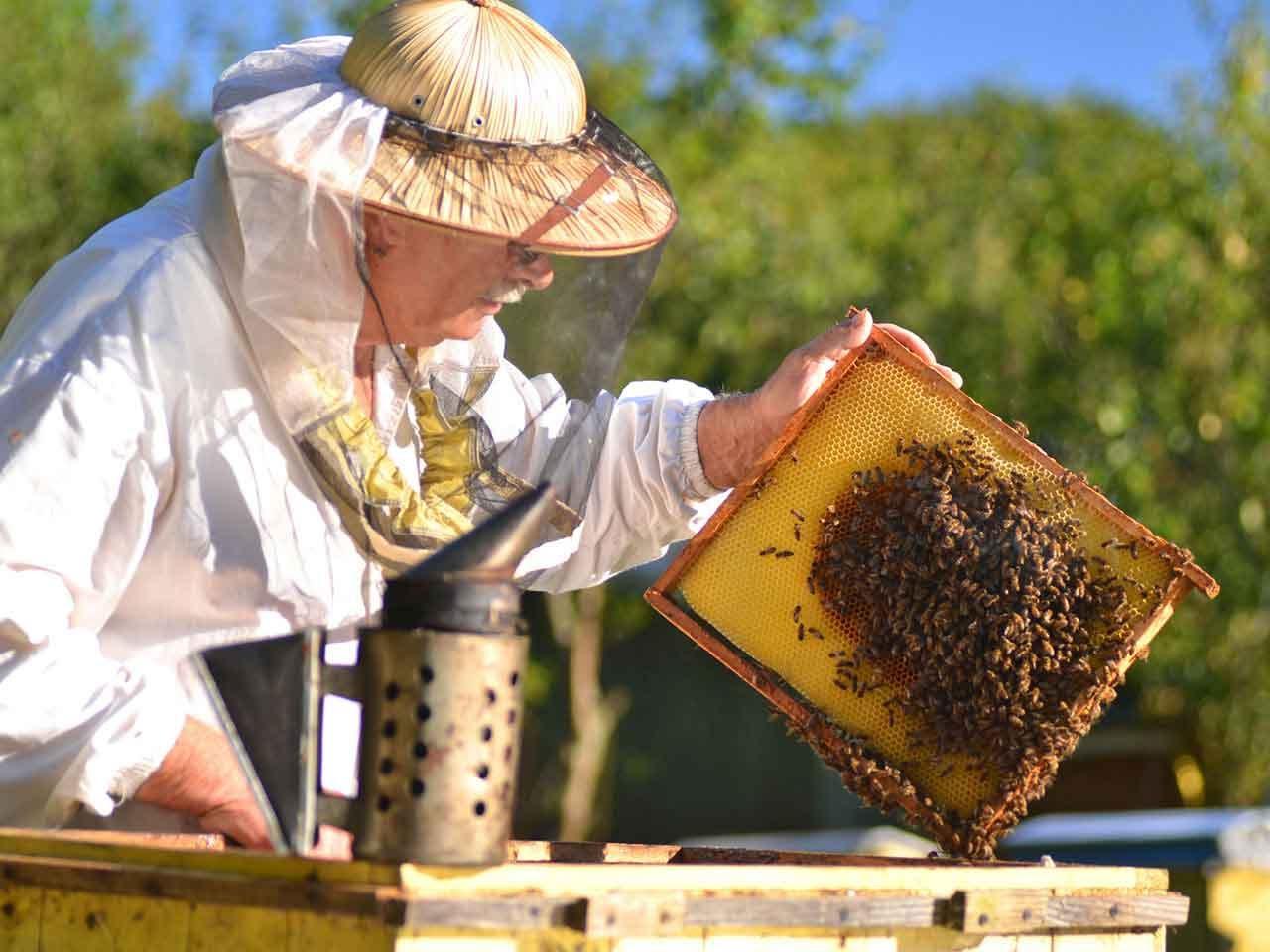 صورة تربية النحل , كيفيه تربيه النحل وانتاج العسل