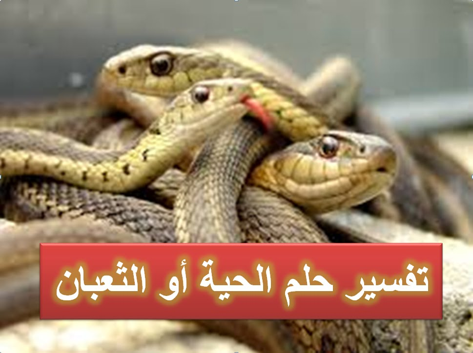 صورة الثعابين في المنام , تفسير رؤيه الثعابين فى الحلم