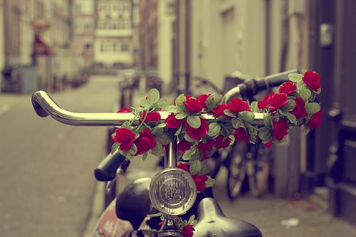 صورة صور ورد رومانسي , اجمد صور للورد