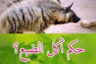 صورة هل يجوز اكل الضبع , حكم اكل لحم الضباع