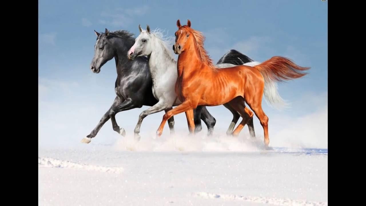 صورة صور خيول , لمحبي الخيول بكل اشكالها اليك اجدد الصور للخيول الجميله