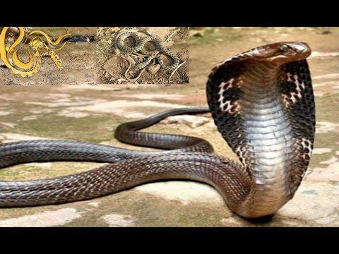 صور انواع الثعابين , اشهر فصيلة للثعبان