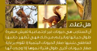 صورة هل تعلم عن الحيوانات , اغرب المعلومات عن الحيوانات
