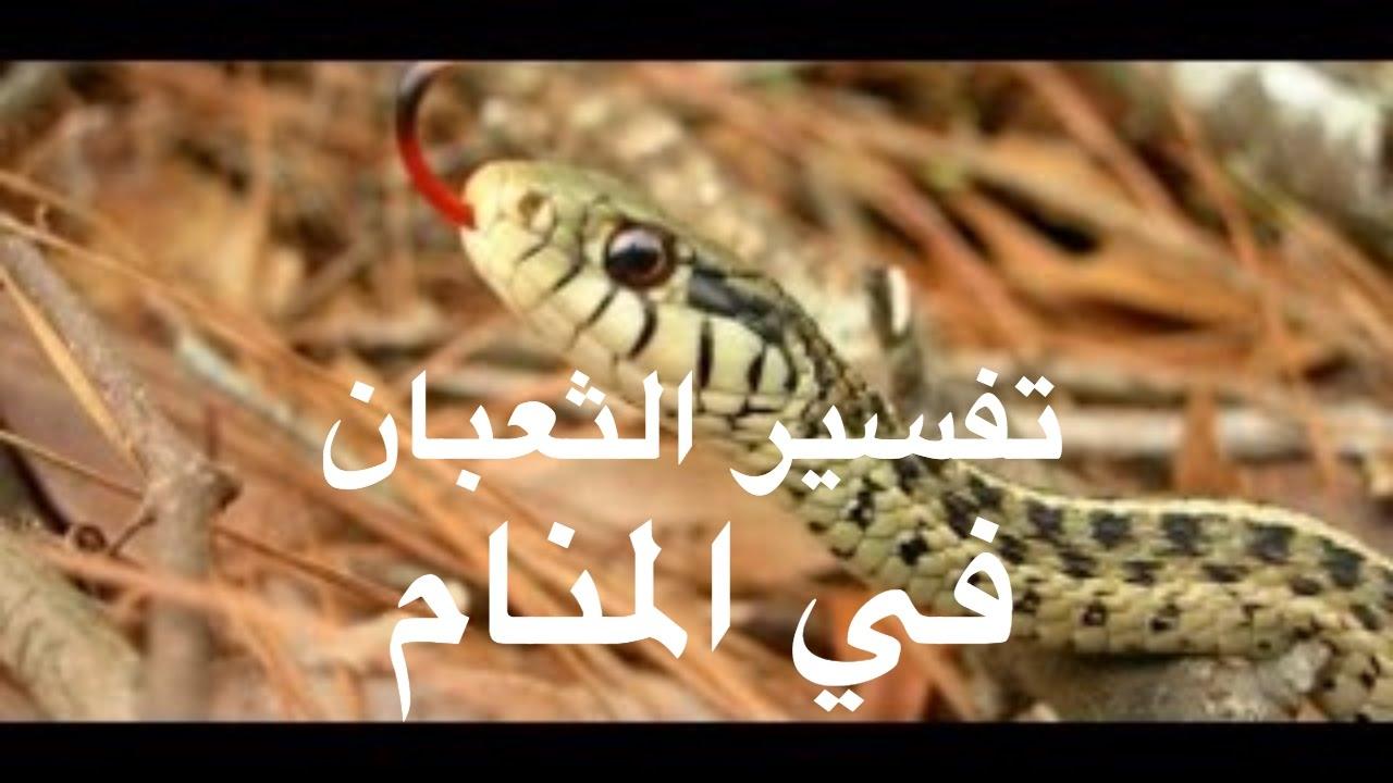 صورة تفسير رؤية الثعبان في المنام , تفسير الحلم بالثعبان