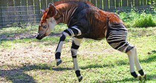 اغرب الحيوانات , اغرب حيوانات الغابة فى العالم