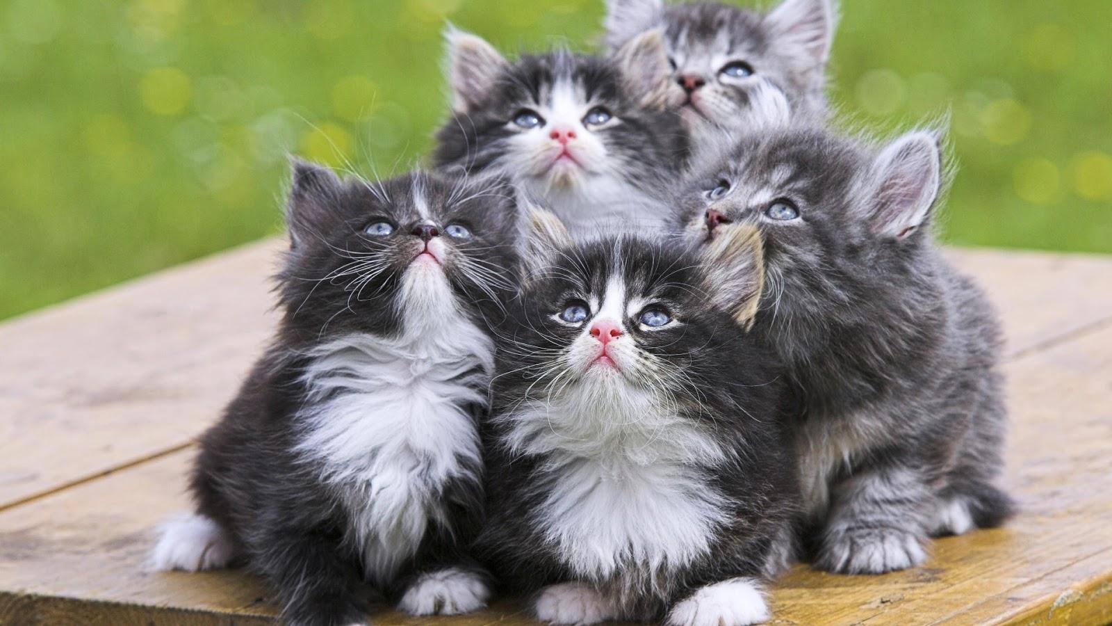 صورة اجمل الصور للقطط في العالم , لعشاق القطط اليك اجمل صور للقطط بجميع انواعها 1367 1