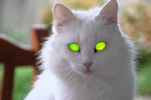 صورة اجمل الصور للقطط في العالم , لعشاق القطط اليك اجمل صور للقطط بجميع انواعها