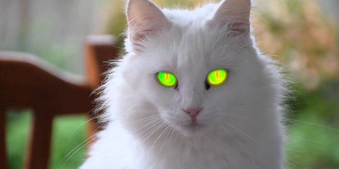 صور اجمل الصور للقطط في العالم , لعشاق القطط اليك اجمل صور للقطط بجميع انواعها