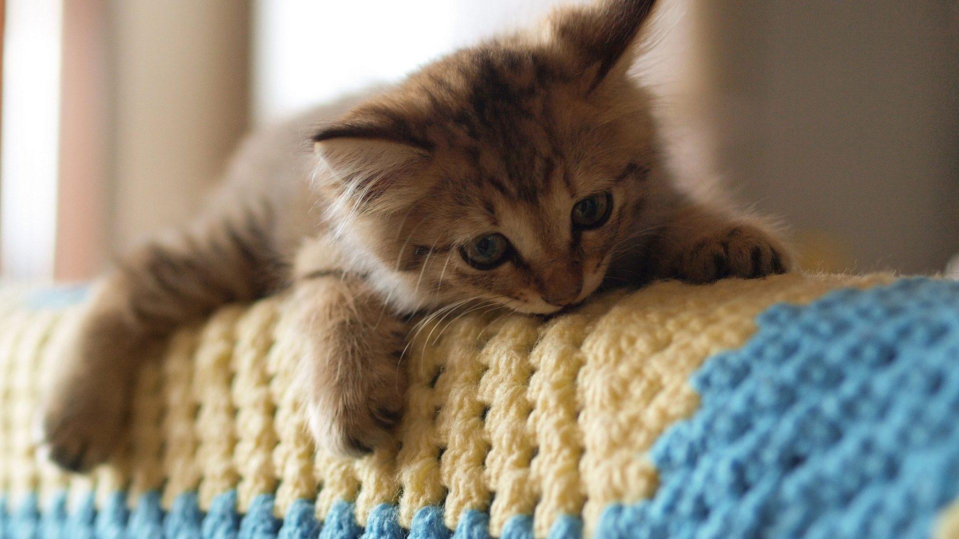 صورة اجمل الصور للقطط في العالم , لعشاق القطط اليك اجمل صور للقطط بجميع انواعها 1367 2