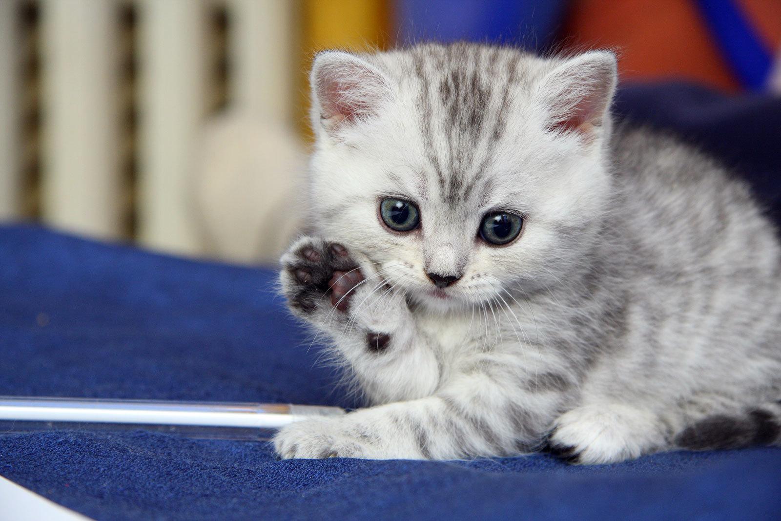 صورة اجمل الصور للقطط في العالم , لعشاق القطط اليك اجمل صور للقطط بجميع انواعها 1367 3