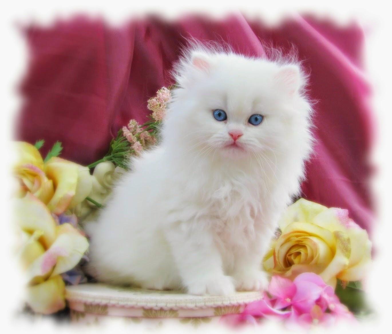 صورة اجمل الصور للقطط في العالم , لعشاق القطط اليك اجمل صور للقطط بجميع انواعها 1367 4