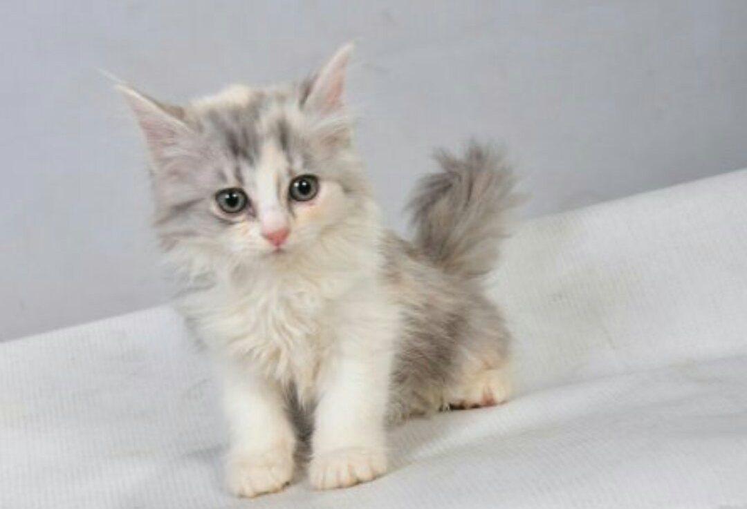صورة اجمل الصور للقطط في العالم , لعشاق القطط اليك اجمل صور للقطط بجميع انواعها 1367 6