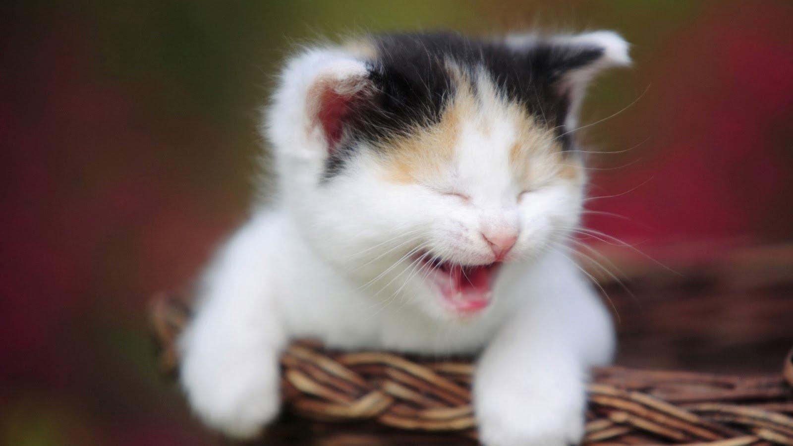 صورة اجمل الصور للقطط في العالم , لعشاق القطط اليك اجمل صور للقطط بجميع انواعها 1367 7