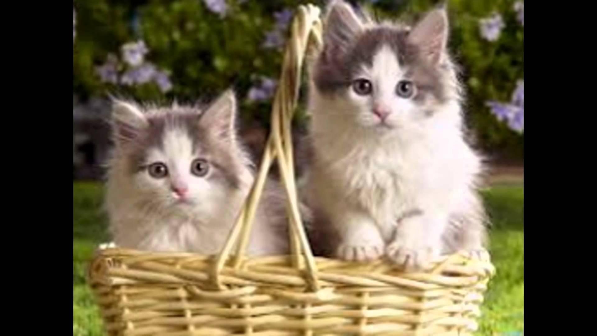 صورة اجمل الصور للقطط في العالم , لعشاق القطط اليك اجمل صور للقطط بجميع انواعها 1367 8