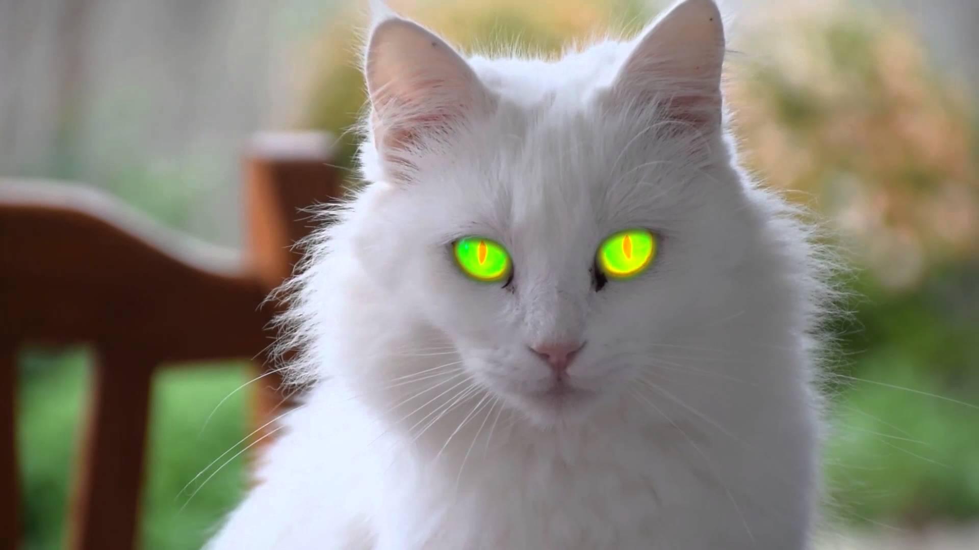 صورة اجمل الصور للقطط في العالم , لعشاق القطط اليك اجمل صور للقطط بجميع انواعها 1367