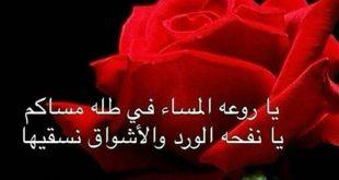 صور عبارات عن الورد , اجمل الكلام ف حب وعشق الورود