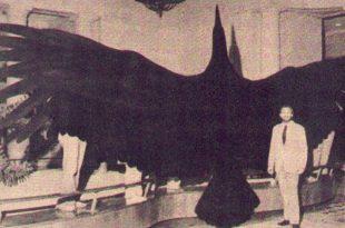 صورة اكبر طائر في العالم , شاهد اكبر طيور العالم مدهش جدا