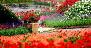 صور منظر جميل , لعشاق الجمال اليك العديد من الصور لمنظر جميل سوف يذهلك