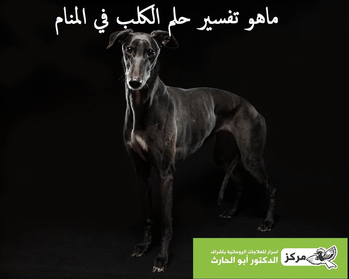 صورة تفسير الاحلام كلب اسود , الكلب الاسود فى الحلم ما تفسيره