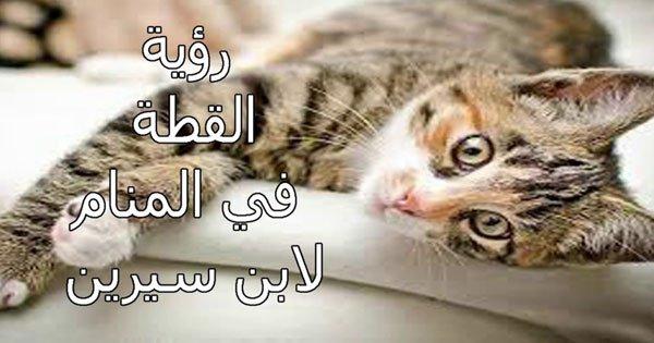 صورة القطة الشقراء في المنام , خير ام شر