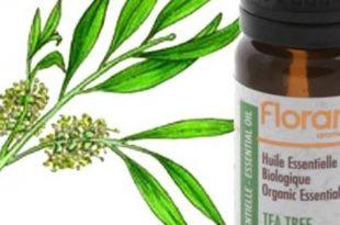 صور فوائد زيت شجرة الشاي , اهم الزيوت الطبيعية