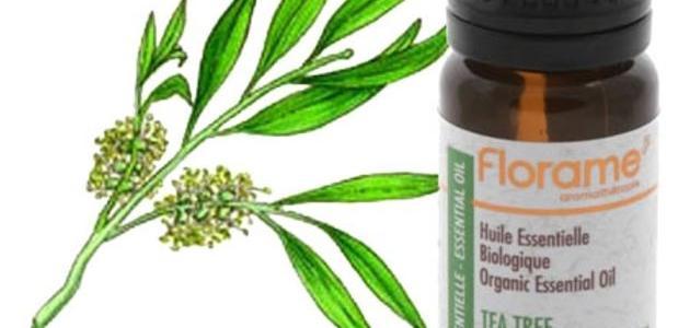 صورة فوائد زيت شجرة الشاي , اهم الزيوت الطبيعية
