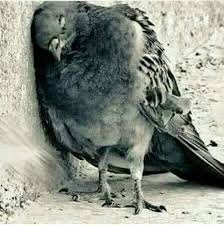 صورة صور طيور حزينة , طيور و لا اجمل