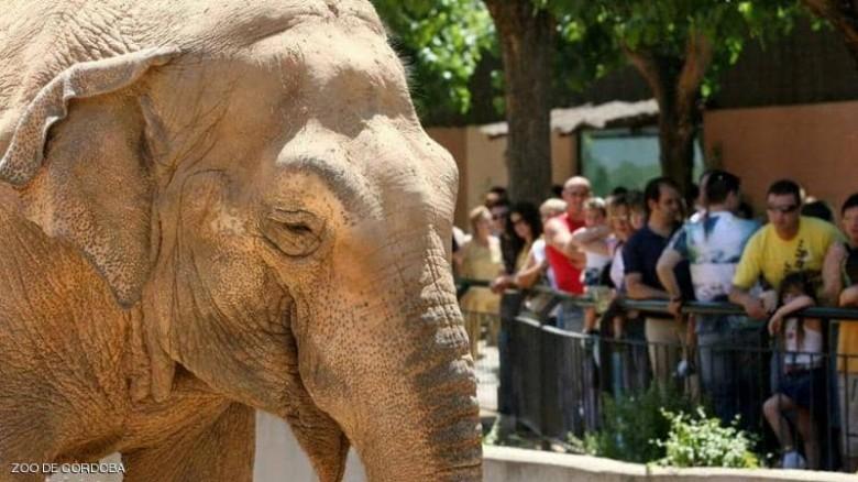 صورة حكم اكل الفيل , ها من الممكن اكل لحم الفيل