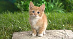 صور حيوانات , اجمل خلفيات للحيوانات
