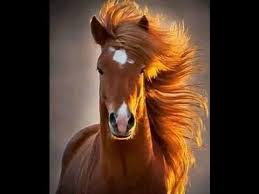 صورة صور خيل , اجمل واحلي صور الخيول