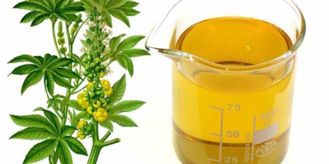 صورة كيفية استعمال زيت الخروع للشعر , فوائد زيت الخروع المذهلة لشعرك