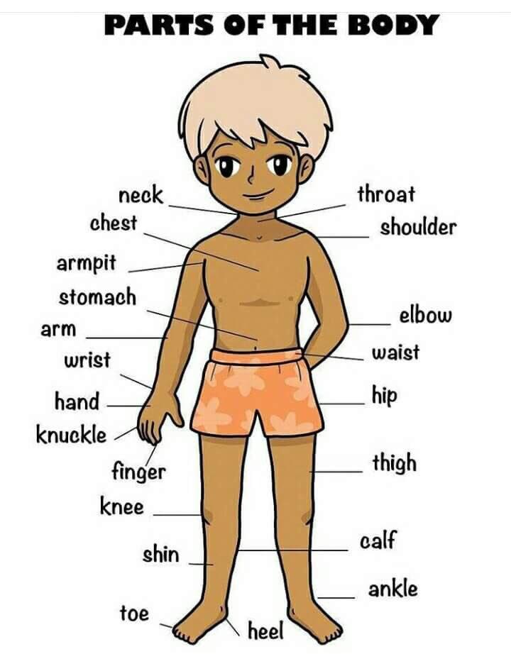 صورة صور جسم الانسان , جسم الانسان و مكوناته بالصور