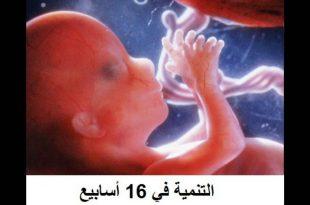 صورة نزول الجنين في الحوض بالصور , شكل الجنين بالصور عند الولاده