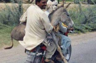 صورة احلا صور مضحكة , صور جميله جدا تجعلك تضحك من قلبك