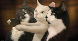 صورة صور مضحكه للقطط , مواقف مضحكه جدا للقطط