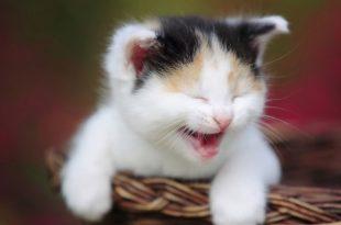 صورة صور قطط مضحكة , صور مضحكه للقطط