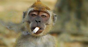 صور حيوانات مضحكة , طرائف الحيوانات مع الانسان