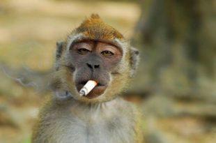 صورة صور حيوانات مضحكة , طرائف الحيوانات مع الانسان