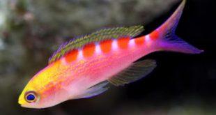 صور صور اسماك جميلة , اجمل انواع الاسماك بالصور