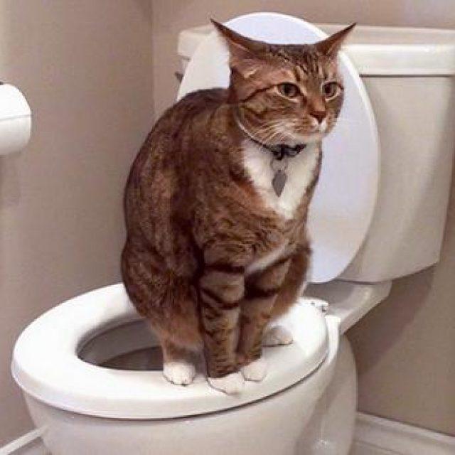 صور علاج ديدان القطط بالاعشاب , كيفيه القضاء على ديدان القطط