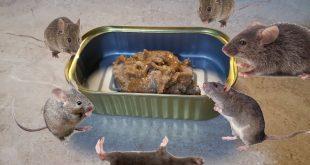صورة القضاء على الفئران نهائيا , افضل طريقه للتخلص من الفئران