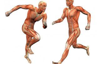 صورة عضلات الجسم واسمائها , معلومات عن عدد العضلات بجسمك وماذا يطلق عليها