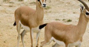 صورة حيوانات تعيش في الصحراء , تعرف على اشهر الحيوانات الصحراوية