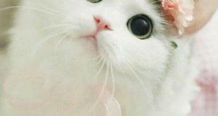 صورة مخلوقات بريئة , قطط جميلة
