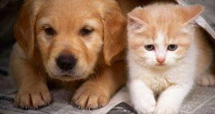 صورة قطط وكلاب, حيوانات اكثر وفاءا من الانسان