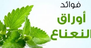 نباتات لها فائدة , فوائد النعناع الاخضر