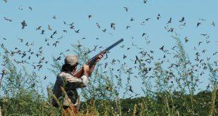 تفسير رؤية الطيور , صيد الطيور في المنام